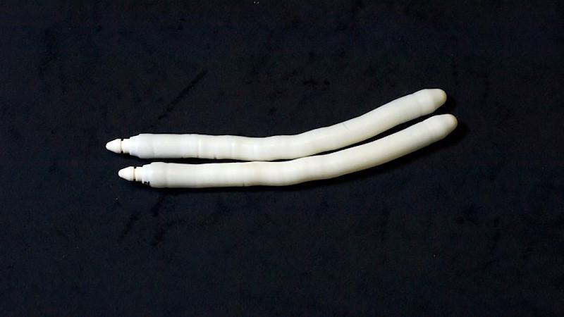 Malleable penile implant